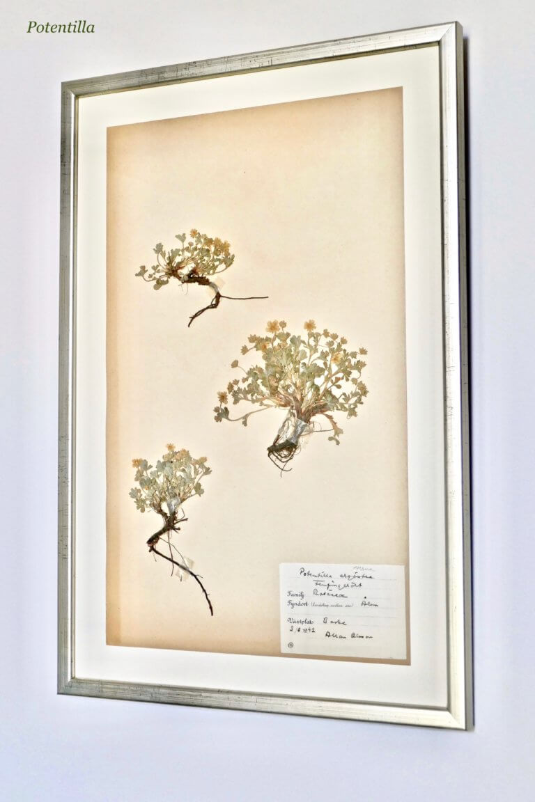 Herbarium - Gallery 2