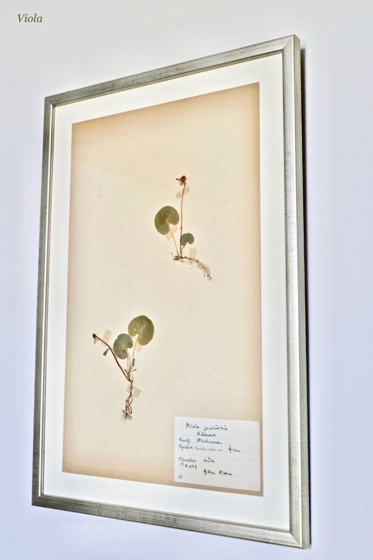 Herbarium Gallery - 3