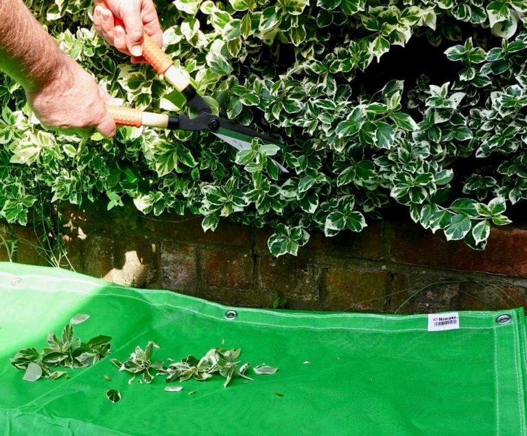 Pruning Sheet
